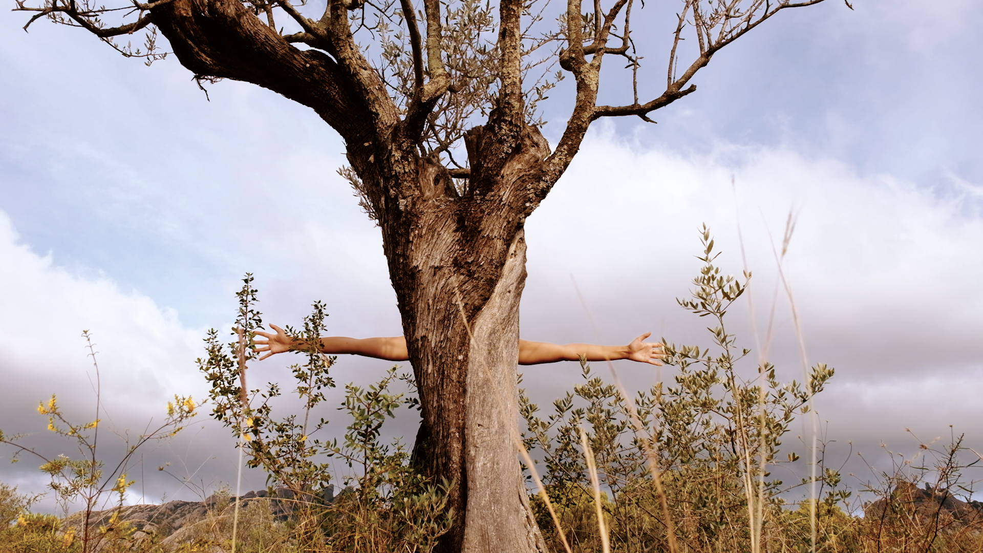 tree with arms protruding